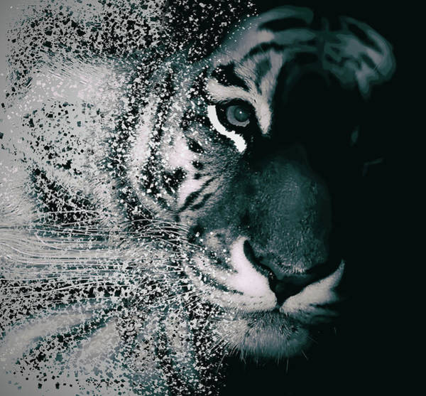 Digital Effect Photograph - Tiger Dispersion by Martin Newman