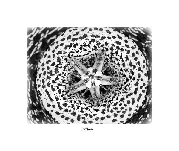 Wall Art - Photograph - Tiger  Flower by Michalakis Ppalis