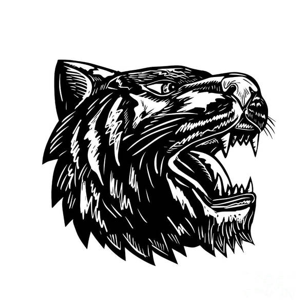 Growling Wall Art - Digital Art - Tiger Growling Scratchboard  by Aloysius Patrimonio