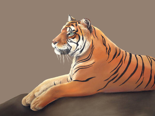 Pastel - Tiger I by Elizabeth Lock
