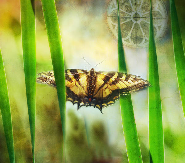 Swallowtail Photograph - Tiger In The Grass by Susan Capuano