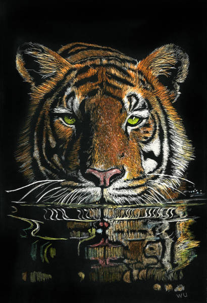 Drawing - Tiger In Water by William Underwood