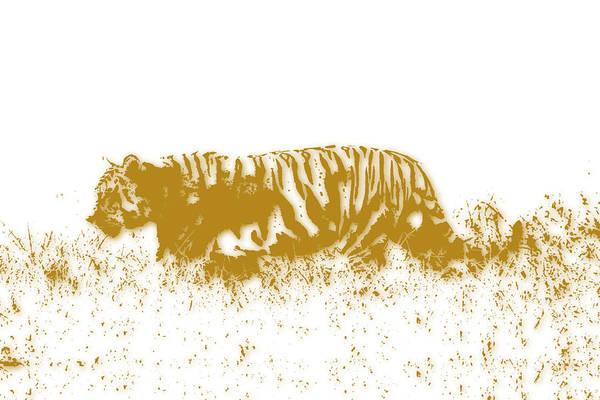 Wall Art - Photograph - Tiger by Joe Hamilton