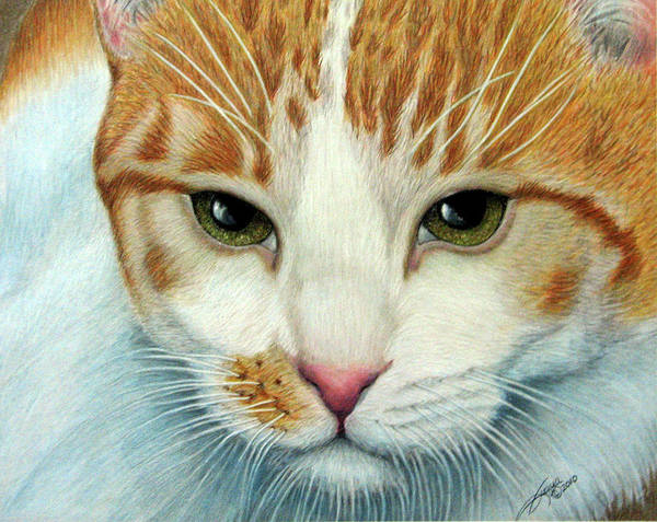 Orange Tabby Drawing - Tiger Lily by Beverly Fuqua