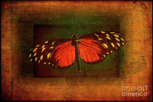 Wall Art - Photograph - Tiger Longwing Hecale by Todd Bielby