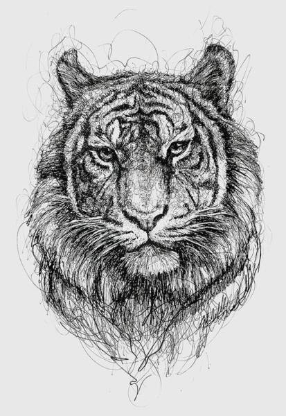 Eye Drawing - Tiger by Michael Volpicelli