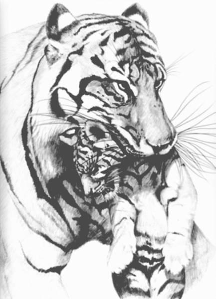 Bengal Tiger Drawing - Tiger Mom by Bob Patterson