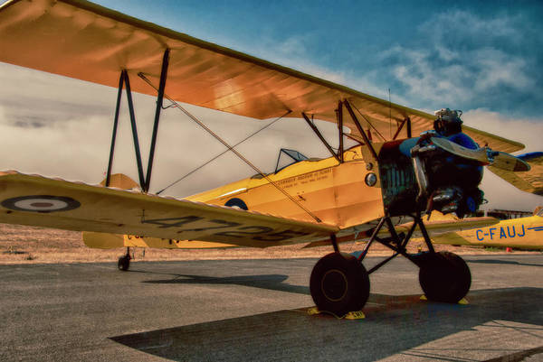 Photograph - Tiger Moth by Doug Matthews