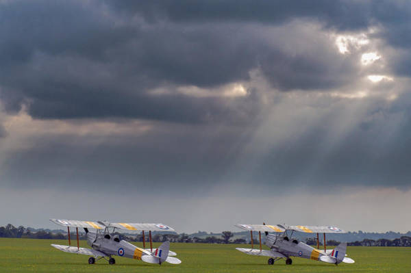 Photograph - Tiger Moths Sunlit by Gary Eason