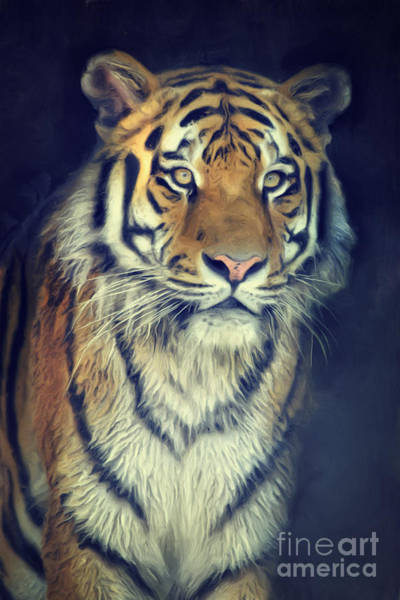 Mixed Media - Tiger No 2 by Angela Doelling AD DESIGN Photo and PhotoArt