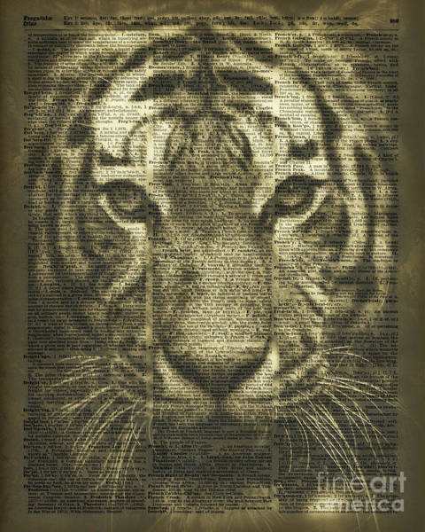 African Tiger Wall Art - Photograph - Tiger Over Dictionary Page by Anna W
