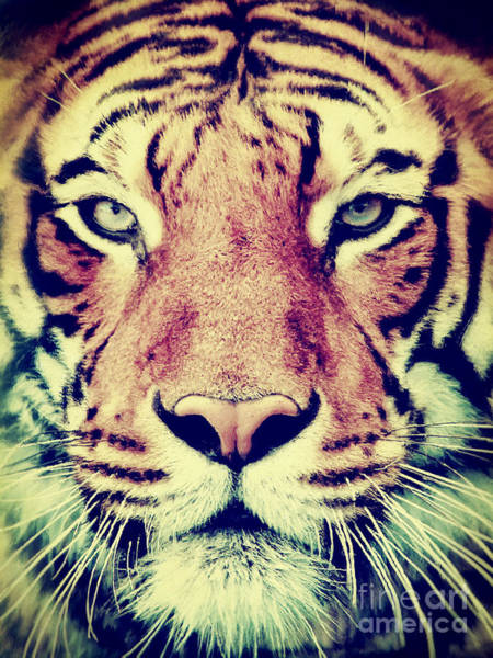Painting - Tiger Portrait 2 by Angela Doelling AD DESIGN Photo and PhotoArt