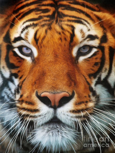Digital Art - Tiger Portrait by Angela Doelling AD DESIGN Photo and PhotoArt