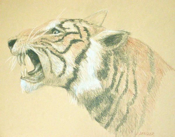 Bengal Tiger Drawing - Tiger Roaring by Deborah Dendler