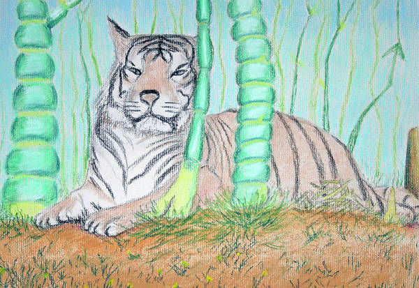 Pastel - Tiger Stare by M Valeriano