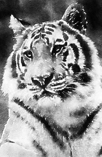 Photograph - Tiger Stripes by Chris Scroggins