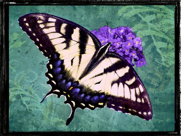 Photograph - Tiger Swallowtail Turf by Leda Robertson