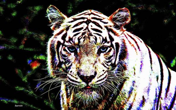 About Face Painting - Tiger Tiger Burning Bright by Don Barrett