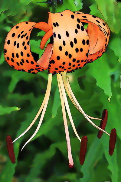 Tigerlily Wall Art - Photograph - Tigerlily by Janice Bajek