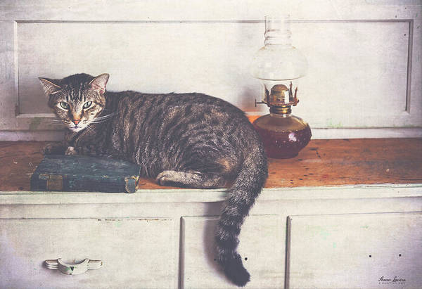 Photograph - Tigger Relaxing On Hoosier Cabinet by Anna Louise