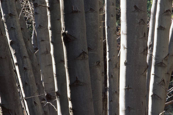Manzana Wall Art - Photograph - Tight Group - Manzana Trail by Soli Deo Gloria Wilderness And Wildlife Photography