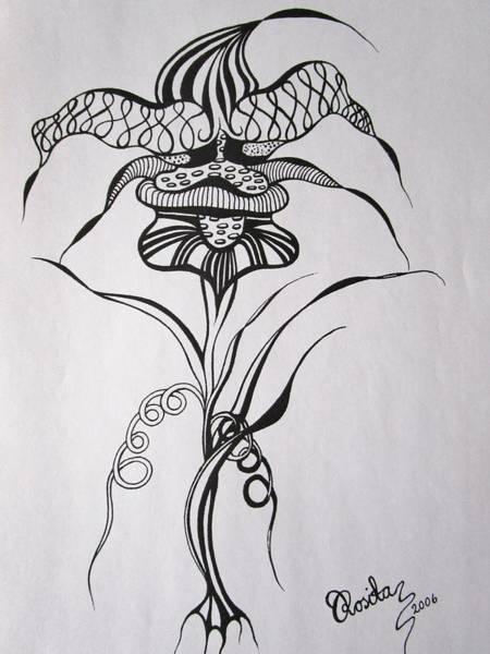 Drawing - Harlequin    by Rosita Larsson