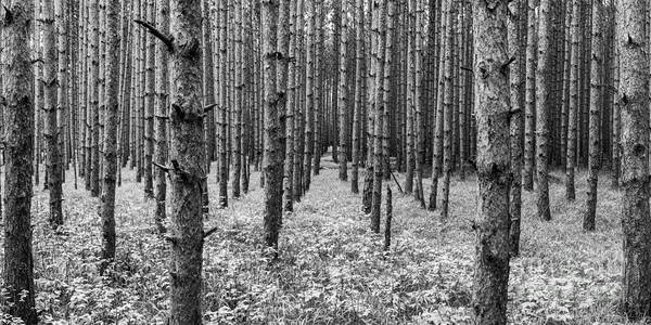 Wall Art - Photograph - Timber Pines In Sleeping Bear Dunes by Twenty Two North Photography