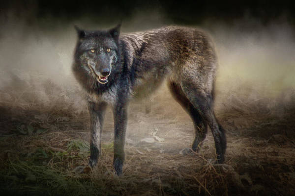 Timber Wolves Photograph - Timber Wolf by Nikolyn McDonald