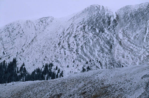 Timberline Photograph - Timberline - Sangre De Christo Range by Soli Deo Gloria Wilderness And Wildlife Photography