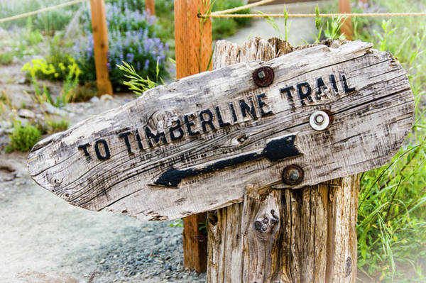 Wall Art - Photograph - Timberline Trail Sign by John Trax