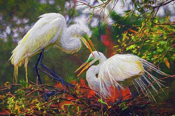 Photograph - Time For A Nest by Alice Gipson