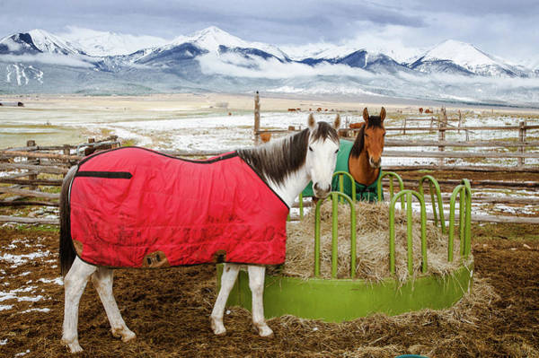 Westcliffe Photograph - Time For Lunch by John Bartelt
