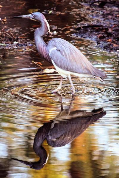 Wall Art - Photograph - Time For Reflection In Hilton Head by Mary Ann Artz