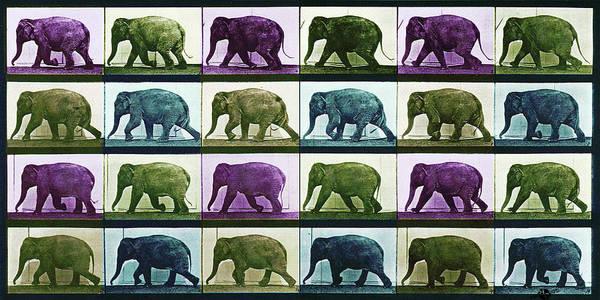 Mixed Media - Time Lapse Motion Study Elephant Color by Tony Rubino