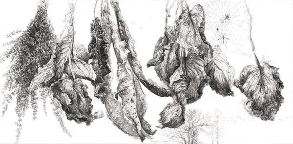 Drawing - Time Of Life. Series Dry Leaves by Sergey Gusarin