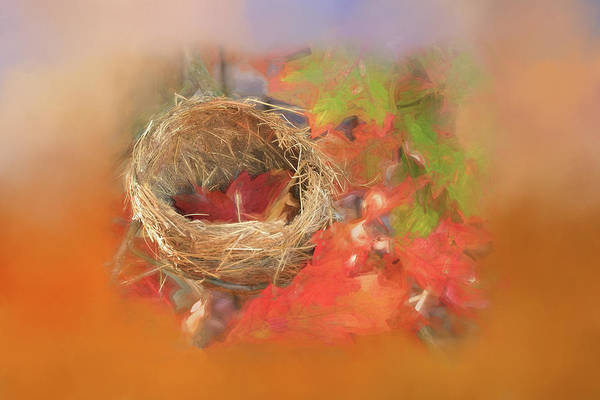 Empty Nest Wall Art - Photograph - Time Share by Donna Kennedy