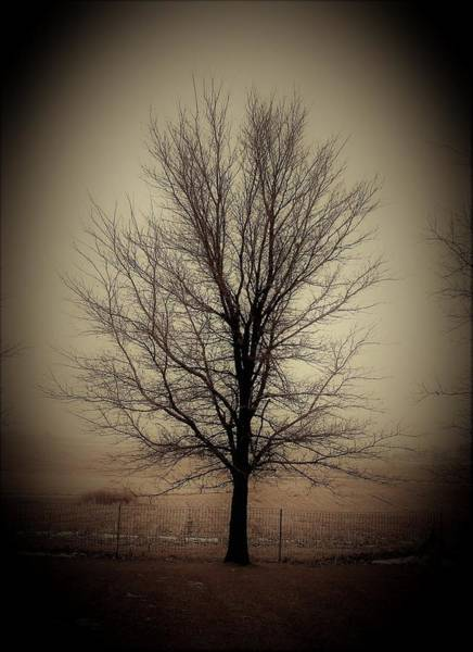 Wall Art - Photograph - Time Tested Tree by Toni Grote