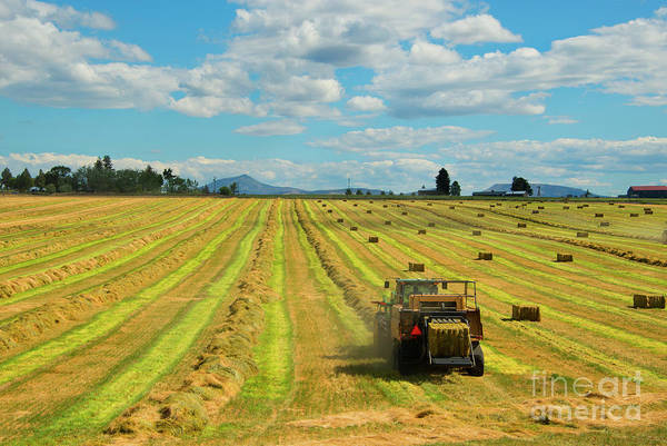 Bales Photograph - Time To Bale by Mike Dawson