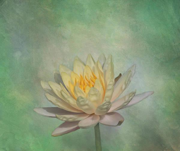 Nymphaea Lotus Photograph - Timeless Beauty - Yellow Water Lily by Kim Hojnacki