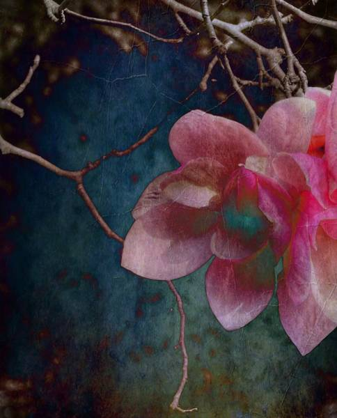 Photograph - Timeless - Magnolia Blossoms  by Marianna Mills