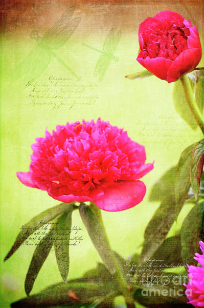 Photograph - Timeless Peonies And Dragonflies by Brenda Kean