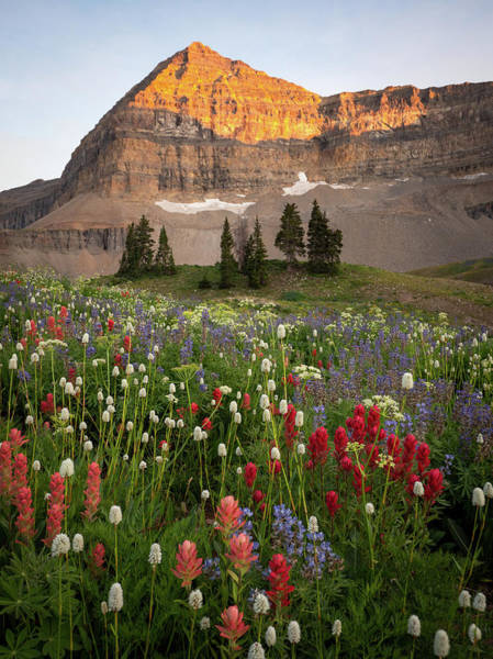 Photograph - Timpanogos Bouquet by Emily Dickey