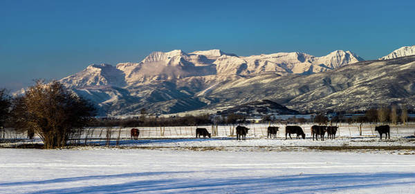 Photograph - Timpanogos From The North Fields by TL Mair