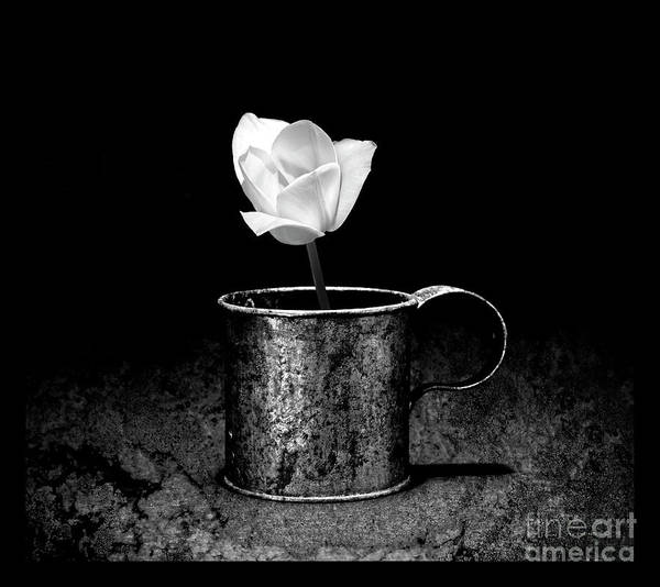 Wall Art - Photograph - Tin Cup Tulip Black And White by John Stephens