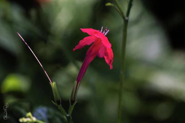 Photograph - Tiny Beauty 1 by Susan Molnar