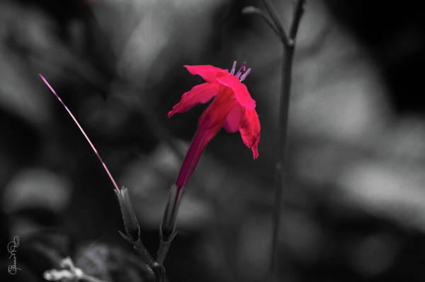 Photograph - Tiny Beauty 4 by Susan Molnar