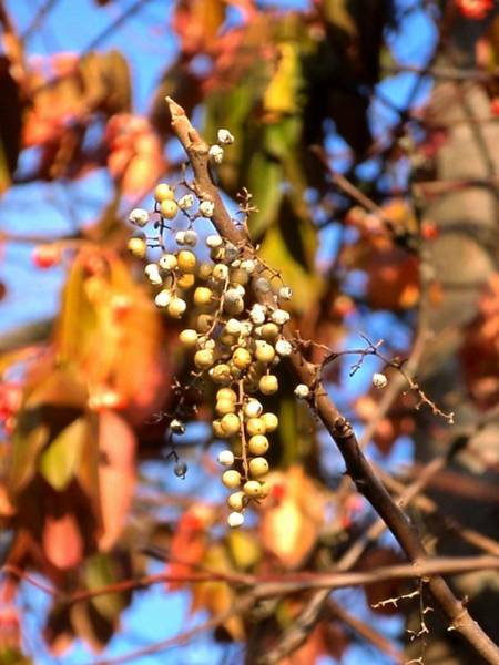Photograph - Tiny Berries by Beth Akerman