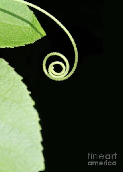 Photograph - Tiny Curl by Sabrina L Ryan
