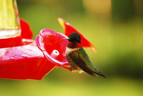 Photograph - Tiny Feathers by Lori Tambakis