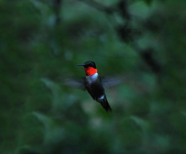 Photograph - Tiny Flier by Lori Tambakis